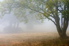 Con_dolce_velatura (Danilo Mazzanti) Tags: danilo danilomazzanti mazzanti wwwdanilomazzantiit fotografia foto fotografo photos photography beigua montebeigua parcodelbeigua nebbia bosco alberi atmosfera velatura colore natura