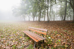 """fine art colour moody shot of a bench against autumn leaves and misty trees, October in Cotes de Grace, near Honfleur, Normandy, France (grumpybaldprof) Tags: colour fineart moody mood atmosphere autumn autumncolours mist park seat garden trees stack misty bench ethereal artistic interpretation impressionist stylistic style light canon 70d """"canon70d"""" sigma 1020 1020mm f456 """"sigma1020mmf456dchsm"""" """"wideangle"""" ultrawide landscape honfleur normandy normandie france calvados """"lachapellenotredamedegrâce"""" """"côtedegrâce"""" equemauville """"montjoli"""""""