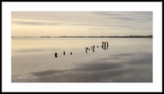 All Quiet at the Hill (RonnieLMills) Tags: high tide flat calm islandhill strangford lough comber newtownards rotten wooden posts old jetty diving platform serene serenity peaceful quiet reflections seagulls