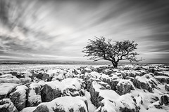 Frozen (Pete Rowbottom, Wigan, UK) Tags: twistleton twistletonscar yorkshire snow limestonepavement lonetree longexposure landscape winter ingleton ingleborough peterowbottom blackandwhite monochrome gnarlytree barren bleak remote uklandscape uk snowy snowing art nikond750 clints grikes photography greatbritain cold cloudmovement clouds wideangle yorkshiredales yorkshirelandscape deserted dramatic drama beautiful dramaticsky blackandwhitelongexposure slowshutterspeed outdoor rocks tree sky rocky inhospitable desolate england blacknwhite classic nature bw light longexposurelandscape ice frozen geotagged