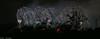 Widnes and Runcorn Bridge Opening Celebration (joanjbberry) Tags: widnes runcorn bridge opening celebration widnesandruncornbridgeopeningcelebration fujifilmxt2 runcornbridge fireworks longexposure