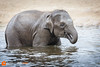 Baby elephant (Victor van Dijk (Thanks for 5M views!)) Tags: baby elephant olifant zoo dierentuin planckendael fav fave faved favorit