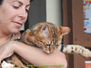 gio_k2_2017_08_381 (giordano torretta alias giokappadue) Tags: abetone bengala gastone gatto kat