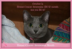 """October is Breast Cancer Awareness (BCA) month. Are you BCA?"" (martian cat) Tags: ribbet russianblue thinkpink thinkpinkforthecure macro pinkribbonsforawareness theperfectpinkdiamond pinkribbon becomeaware inspirational breastcancer motivational kitty kittycat cat pet bca breastcancerawarenessribbon bcaribbon allrightsreserved© motivationalposter marin ©allrightsreserved martiancatinjapan© gif ribbon closeup breastcancerawareness ☺allrightsreserved allrightsreserved ©martiancatinjapan ☺martiancatinjapan martiancat martiancat© ©martiancat martiancatinjapan"