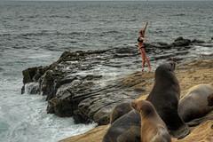 Seal Whisperer 2017.08.04.16.22.06 (Jeff®) Tags: jeff® j3ffr3y copyright©byjeffreytaipale california lajolla pacific ocean water coast westcoast rocks woman girl swimsuit seals sealions