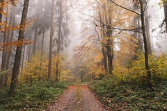 autumnal atmosphere (desomnis) Tags: autumn fall nature autumnal forest woods woodland trees leaves fog mist misty foggy haze nebel nebula mystical mühlviertel austria österreich landscape landscapes landschaft canon 6d sigma 35mm canon6d sigma35mm sigma35mmf14 sigma35mmf14art desomnis