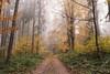 autumnal atmosphere (desomnis) Tags: autumn fall nature autumnal forest woods woodland trees leaves fog mist misty foggy haze nebel nebula mystical mühlviertel austria österreich landscape landscapes landschaft canon 6d sigma 35mm canon6d sigma35mm sigma35mmf14 sigma35mmf14art desomnis