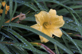 Raindrops on Flowers and Grass