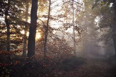 Nebel-Wald-Licht-Kampf-Herbst (Uli He - Fotofee) Tags: ulrike ulrikehe uli ulihe ulrikehergert hergert nikon nikond90 fotofee oktober herbst 2017 wald plätzer burghaun licht sonne sonnenaufgang nebel