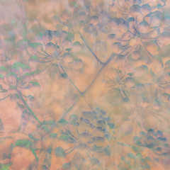 289/365 (Jane Simmonds) Tags: iphone multipleexposure abstract ivy seedheads autumn 289365 3652017