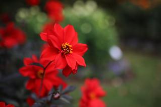 autumnal flowers (1)