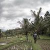 Visite des rizières (Ye-Zu) Tags: portrait tdm bali rizière tourdumonde rice worldtour field munduk indonésie