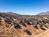 APC_0591 (TruffShuff) Tags: 2017 ca california ridgecrest may2017