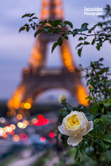 Tour Eiffel (Andreas Iacovides) Tags: paris rose eiffel closeup art canon eos 5d mark iii france tour