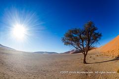 Dune 45, Namib-Naukluft Park, Namibia (Ulrich Münstermann) Tags: africa afrika dune45 dünen hardapregion landschaft namibnaukluftpark namibia natur sesriem wüste daytime desert dry dunes landscape landschap morning nature natuur sand tree