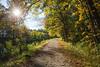 Autumn path (lilredlizzie) Tags: autumn fall foliage outdoors outside travel sun sunlight path beautiful pretty newhampshire newengland landscape canon canon6d canon2470l nature woods minefallspark nashua nh leaves trees scenic