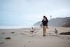 Luna loves her mom (lauripiper) Tags: beach leocarrillostatebeach dogs americanbulldog poodle mixedbreed rescue mutts nikon d810 2017 luna freddie morning walk