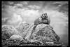 125394_Marmot (trinrn7) Tags: animal colorado mtevans marmot fujifilm xt1
