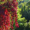 GrEEcE is... (sifis) Tags: greece color nature sakalak red