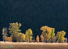 Autumn (geospace) Tags: fall autumn grandteton trees