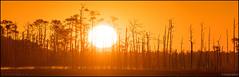Alone, Together (Nikographer [Jon]) Tags: blackwaternationalwildliferefuge maryland fall oct october 20171021d500096060 d500 sunrise trees panorama baldeagles