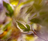 Dancing leaves in autum wind. (greenwave2009) Tags: atumn leaves green closeup macro