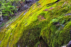 Lichen Growing on a Side of a Mountain (Yosemite National Park) (thor_mark ) Tags: nikond800e day5 triptopasoroblesandyosemite yosemitenationalpark lookingne capturenx2edited colorefexpro outside trees nature landscape pacificranges sierranevada yosemiterittersierranevada centralyosemitesierra yosemitevalley johnmuirtrail morninghiketovernalfall lichen project365 california unitedstates