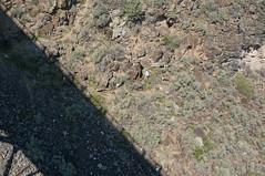seven sheep, sun & shadow (rovingmagpie) Tags: newmexico taos riograndegorgebridge riograndegorge bighornsheep desertbighorns bighorns shadow riogrande thehighbridge sheep bridge bday2017