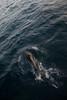[20170827C1030-201709182244].jpg (txindoki) Tags: tarifa cádiz2017 20170930dvd01 delfín estrechodegibraltar