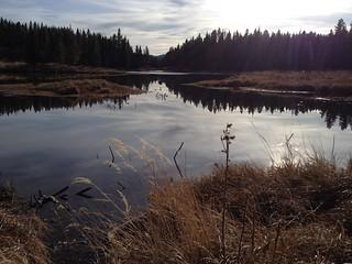 Autumn Beaver  Dams