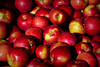 Macs (Brian 104) Tags: apples macintosh orchard red autumn harvest crisp