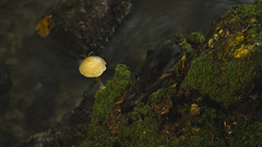 Thieves den (MatsOlsen) Tags: rövarkulan nationalpark forrest svamp mushroom insect