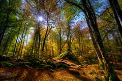 Sol de otoño (ric.gayan) Tags: