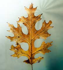 Hoja otoñal - Autumn leaf (Cristian Ciaffone) Tags: hoja otoño