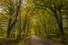 Laurieston Forest , Dumfries & Galloway (cazalegg) Tags: autumn galloway forest sunlight nikon explored scotland landscapes road