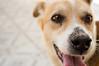 Léo (yoshimi_su) Tags: animaldeestimação d3200 diadema léo nikon susanyoshimi sãopaulo cachorro cão dog fotografia pet photography sp