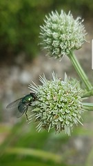Fly. (jessicajones515) Tags: nature natural botanical bright fly flowers detailed green gardens