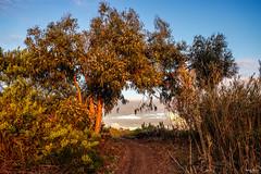 Two sides of autumn - Dois lados do outono (Yako36) Tags: portugal peniche ferrel paisagem landscape nature natureza outono autumn countryside campo fujixf1855f284 fujifilmxt10 xf1855mmf284rlmois