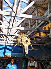 Dolphin Skeleton (Chris C. Crowley) Tags: dolphinskeleton marinesciencecenter beams sky people lecture roof rafters building sealife marinelife educational