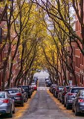 Garden Street ((Jessica)) Tags: massachusetts boston beaconhill newengland symmetry autumn fall tree trees foliage vanishingpoint street gardenstreet