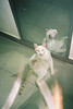 (bìng) Tags: cat cats neko film 35mm photography fujifilm flash canon analog zoom76 prima animal every day life vietnam asia asian black white