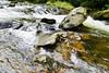 Watersmeet, Devon 06/08/2017 (Gary S. Crutchley) Tags: watersmeet exmoor north devon uk great britain england united kingdom landscape countryside country nt national trust nature river lyn hoar oak water nikon d800 natural