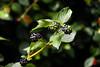 (ドロイナ) Tags: forest green tree trees japan nature lake 森林 緑 木 日本 自然 湖 macro flower butterfly