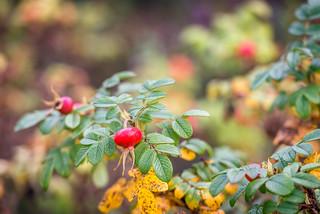 Autumn colors - herfstkleuren