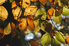 Autumn Love (Viktoria McKee) Tags: macrophotography macrolovers macroshots macroshot makro macroworld makrofotografie macro macrodreams macromood macrolove macrounlimited bokeh autumn fall naturelover naturephotography natureshots nature natureshot natural light backlight sunlight daylight leaves