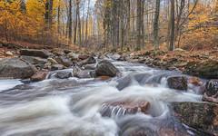 "The wild ""Ilse"" (Stefan Sellmer) Tags: autumn waterfall woods germany rocks outdoor longexposure ilse harz valley ilsenburgharz sachsenanhalt deutschland de"