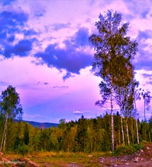 Sunset pastels (evakongshavn) Tags: sunsetchasers sunsets sunsetlovers sunset sunlight happycolor color colors colorful colours pinkclouds purple purpleclouds pink sky skyandsunset pastelclouds cloudsky clouds cloud foest wood landscape tree forest grass lake field park