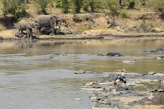 elephants dans la talek