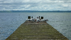 Lake Taupo, Pier to Pier (Eye of Brice Retailleau) Tags: angle beauty coast composition lake landscape nature outdoor panorama paysage perspective scenery scenic shore view water pier extérieur côte rivage waterscape lakeside eau ciel clouds cloudy bird birds seagulls newzealand taupo