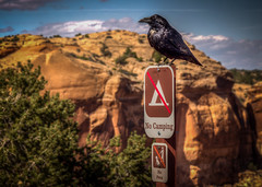 He's there to remind you---No Camping, No Pets (donnieking1811) Tags: utah canyonlandsnationalpark canyonlands nationalpark mountain bird signs outdoors sky clouds sunny canon 60d hdr lightroom photomatixpro